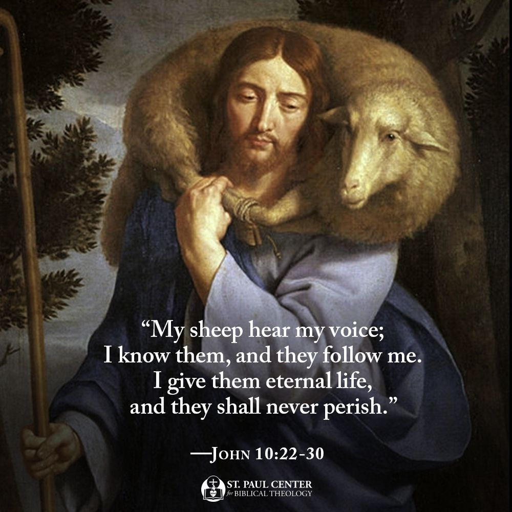 John 10 22 30 Bible Reflection The Good Shepherd Bible Quotes