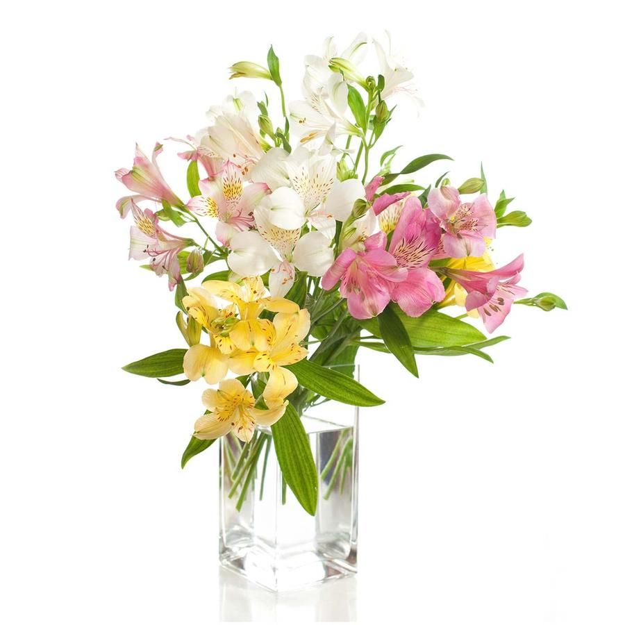 Send Flowers To Kolkata Online Flower Delivery Flower Delivery Fresh Flower Delivery