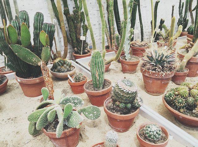 Les Piquantes With Images Plants Cactus Garden Succulents
