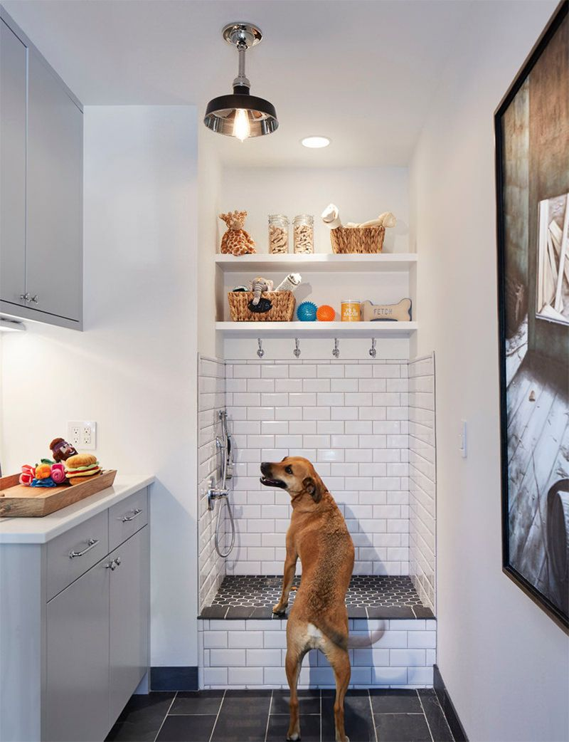 10 Lavanderias Com Dog Shower Um Sonho Para Quem Tem Cachorro Em