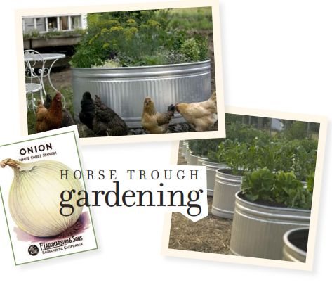 Horse-trough Gardening: Click here to download a pdf of complete instructions for making your own no-bend, no-weed garden plots.