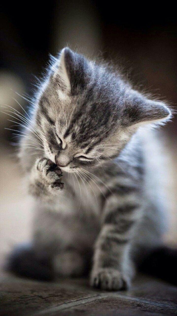 Pin Di Angel Prewitt Su Mix Gattini Piccoli Adorabili Gattini