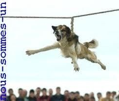 006 STOP dog spinning in Bulgaria. WTF HOW CAN PEOPLE DO THIS
