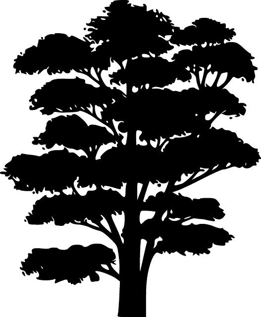 Gratis afbeelding op Pixabay - Black, Silhouet, Boom, Grote ...