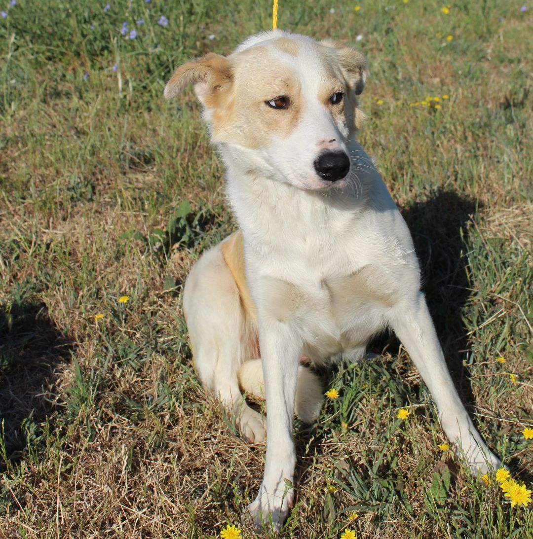 Adopt Pito On Dog Adoption Help Homeless Pets Homeless Pets