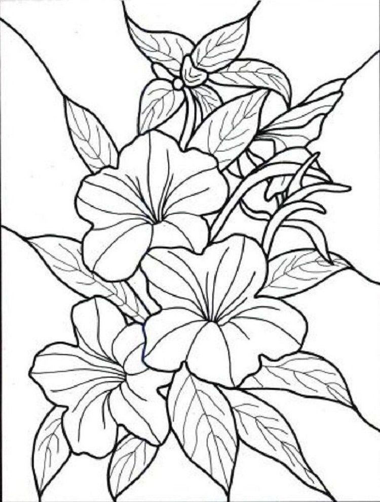A Flower Coloring Pages Lukisan Bunga Lukisan Bunga