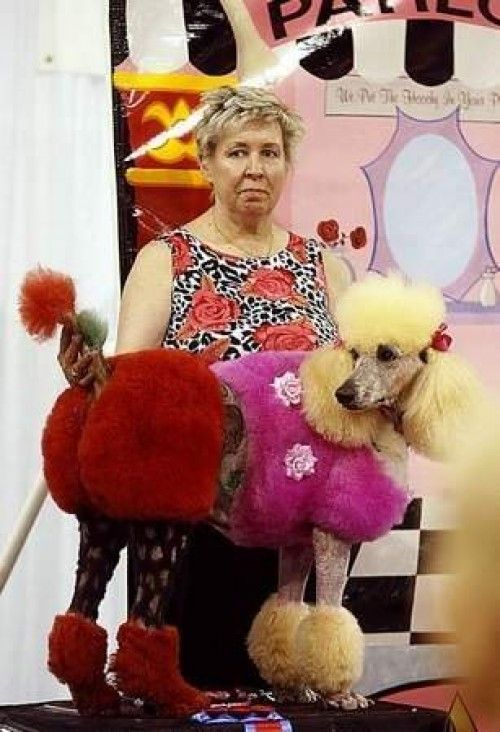 Crazy haircuts and hair color - dogs-love the ladys face ...