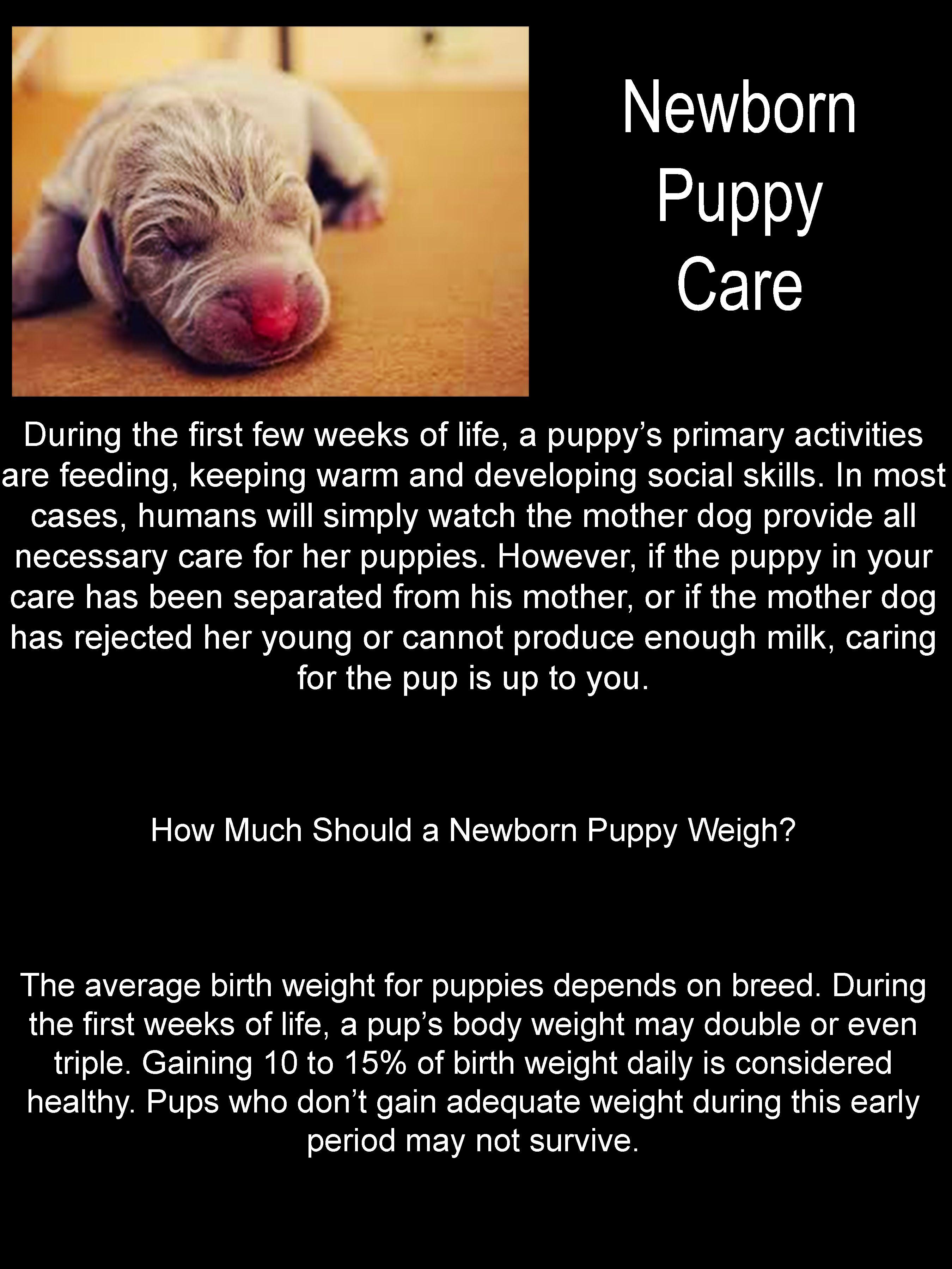 Newborn Puppy Care Stuff To Buy Pinte