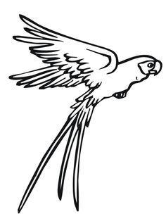 Fliegender Papagei Ausmalbild Malvorlagen Tiere Vogel Malvorlagen Papagei Zeichnung