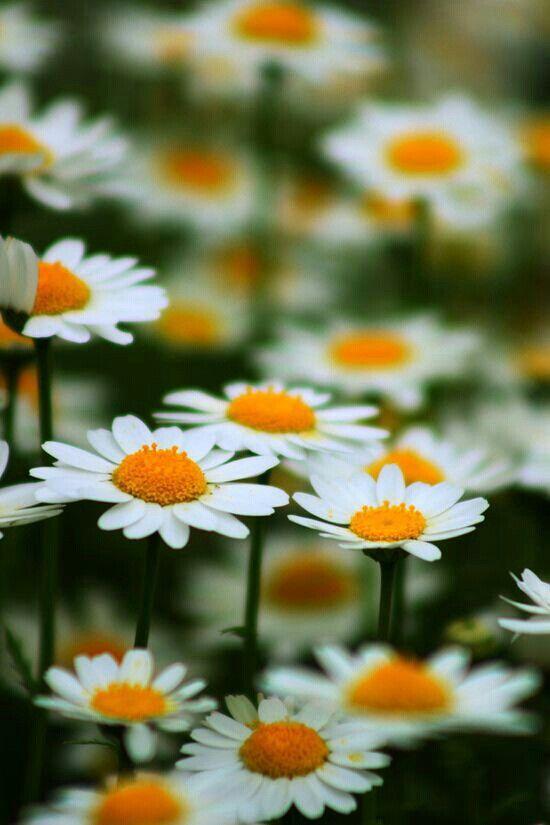 """Hoje, sim, eu resolvi colher só flores… Mesmo que a chuva insista em cair, Mesmo que os espinhos me açoitem, Mesmo que me falte seus beijos tão doces, Mesmo que tudo pareça ruir. Eu hoje resolvi colher só flores… Mesmo que eu não veja do filme o seu fim, Mesmo que você não seja mais como antes, Mesmo que essa dor me pareça gigante, Mesmo que não tenha motivo pra sorrir… Porque hoje amanheci mais """"gente"""" Ao ver o amanhecer tão de repente Senti a luz divina em meu viver. Por tal, não há rajada…"""
