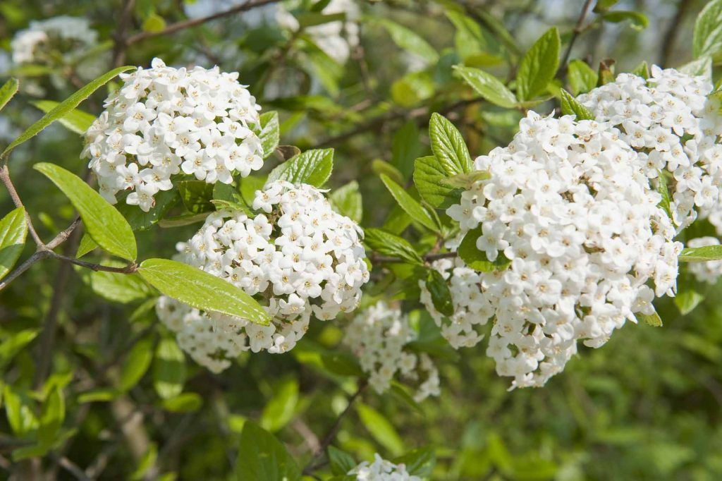 Choisir Les Plantes Qui Poussent Vite Pour Cacher Un Vis A Vis