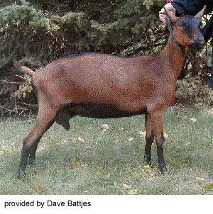 Vet CDE - skot, prasata, koně, kozy, ovce