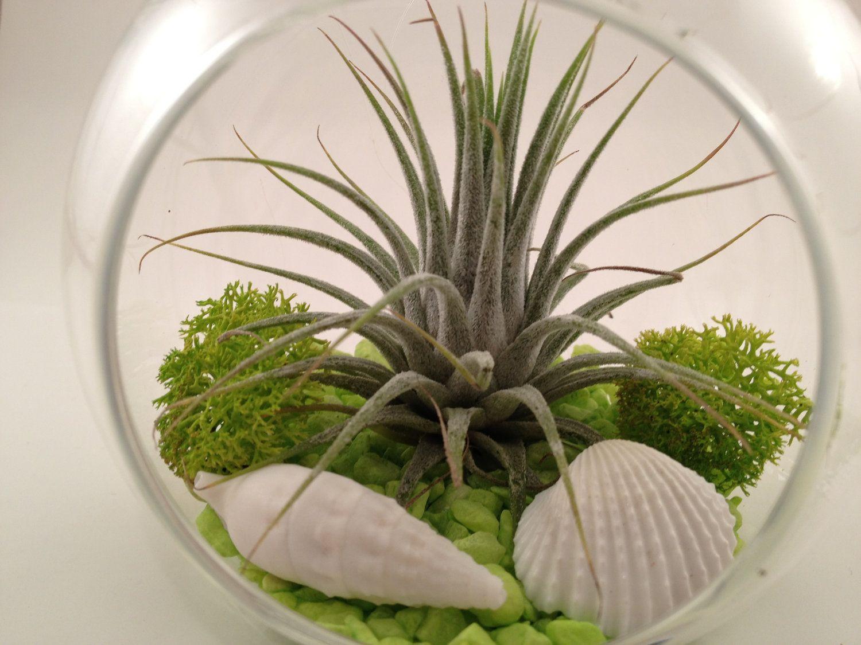 Plantes en bocal : DIY pour un terrarium de plantes d'intérieur !   Jardin facile, Plantes ...