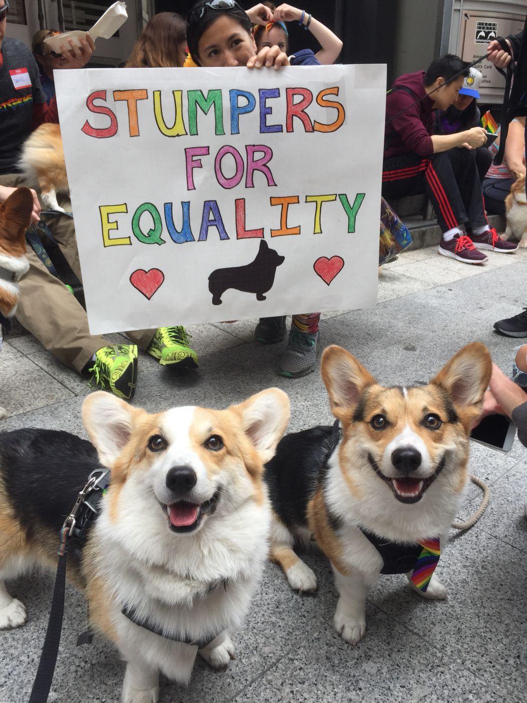 No Title Cute Dogs Corgi Puppies