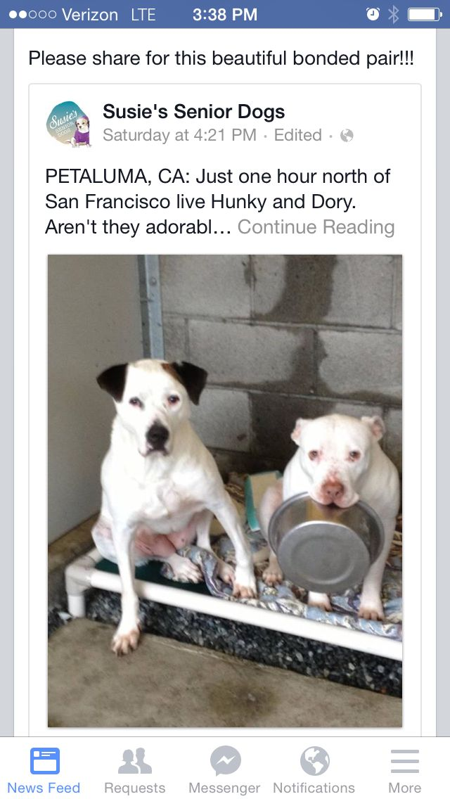 Please Please Share Bonded Pair Vet Cost Covered For Life And
