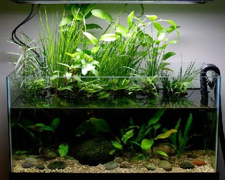 how to make plants grow faster in aquarium