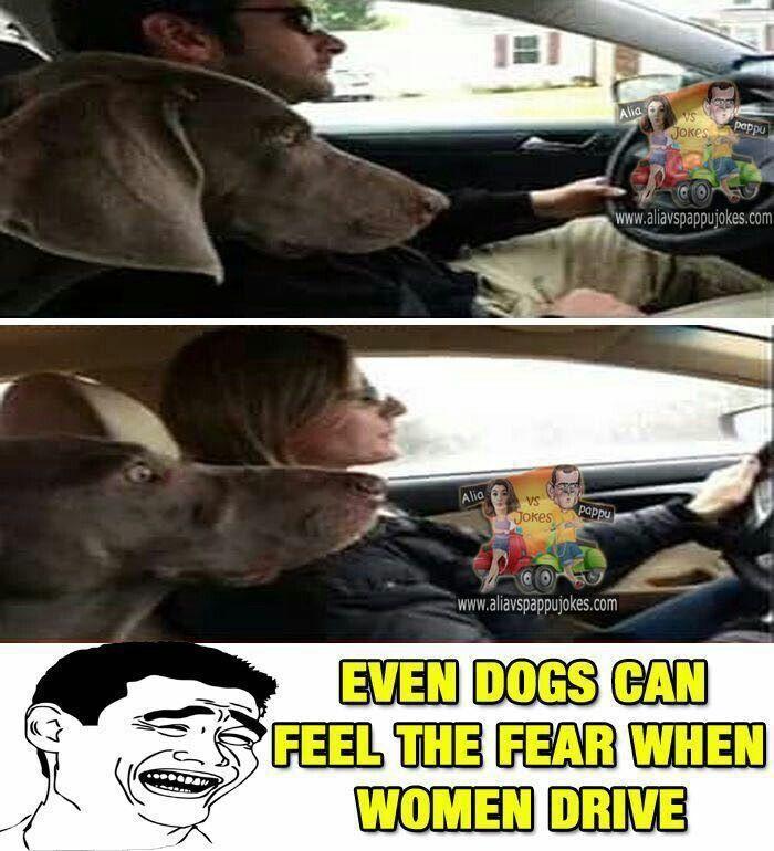 Pin By Gauri Sharma On Jokes Jokes Animals Dogs