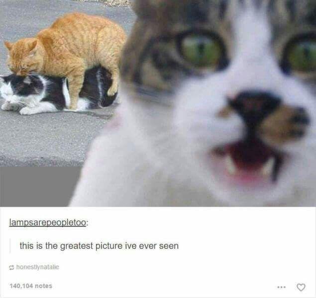 Animal photobombs best