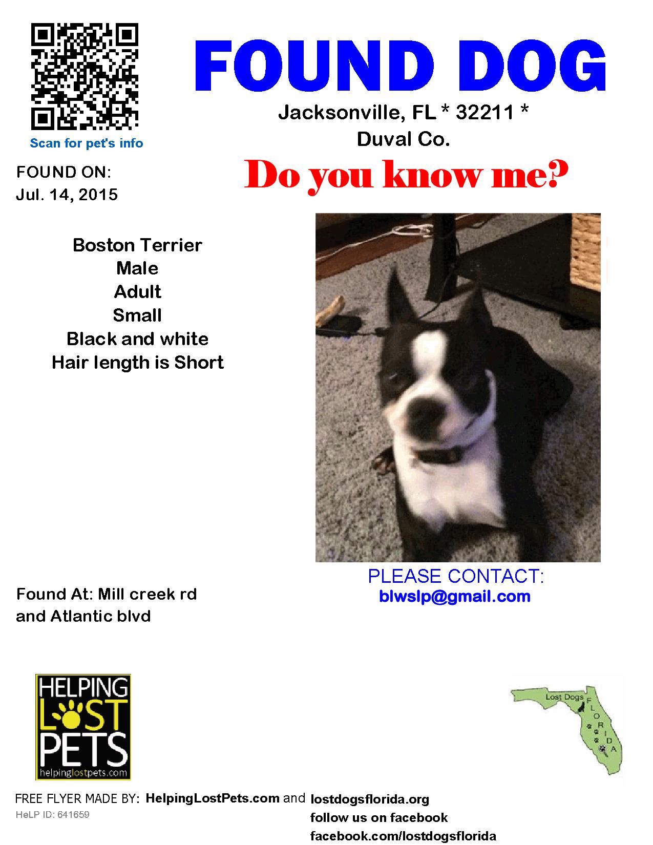 Found Dog Boston Terrier Jacksonville Fl United States Jacksonville Boston Terrier Dogs