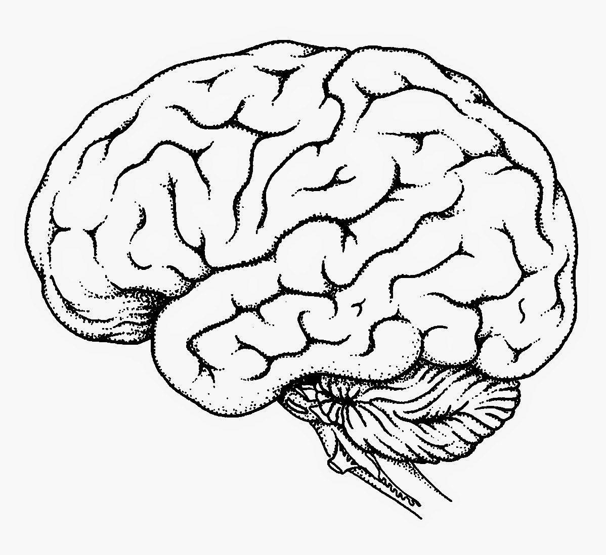 Printable Unlabeled Brain Diagram - Aflam-Neeeak