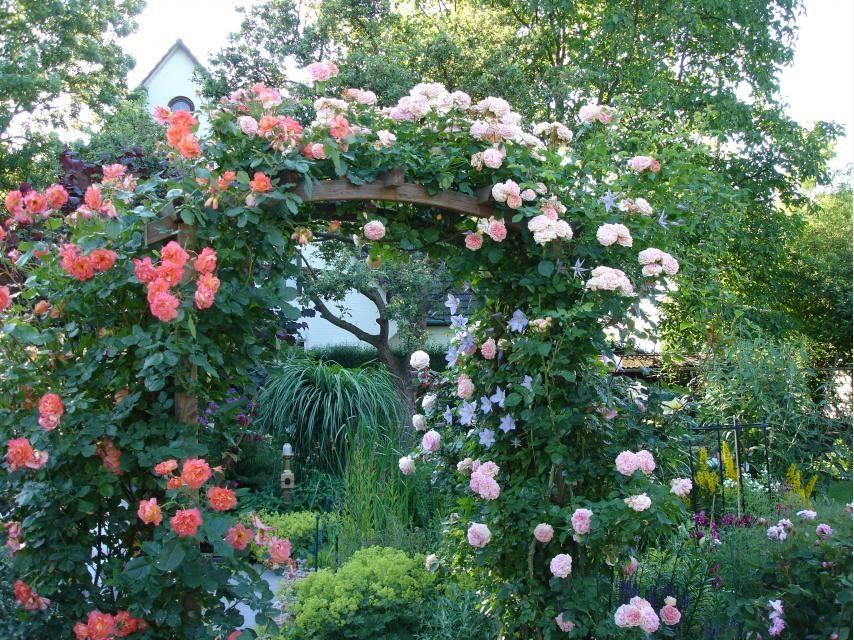 kletterrosen und clematis traumpaar f r den garten garten garten rosen und kletterrosen. Black Bedroom Furniture Sets. Home Design Ideas