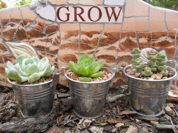 Wedding Take Away Gifts: 80 Succulents, Silver Pails, Wedding And Party Favors