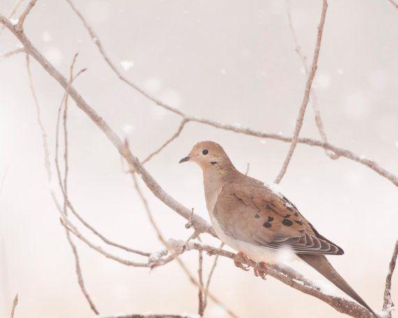 Mourning Dove in Snow Borderless 8x10 Fine Art Photography,Snow Scenes, Bird Art Wall Decor