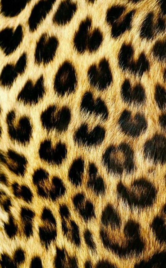 Pin von Safoon Abdullah auf Walk on the wild side | Pinterest