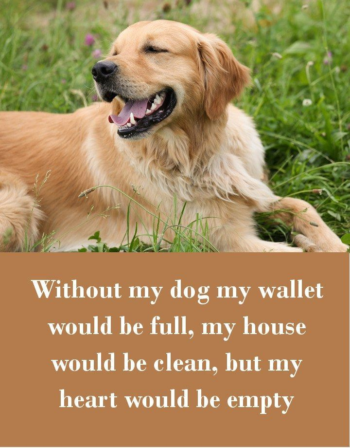 42 Dog Sayings Which Will Touch Your Heart Dogs Golden Retriever
