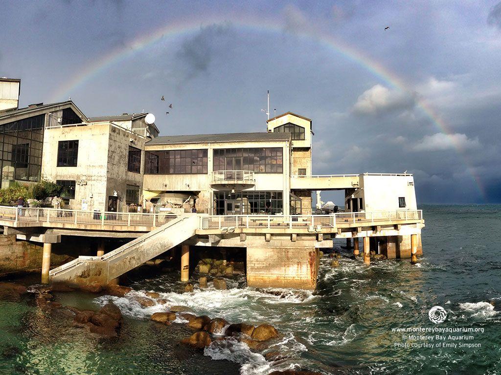 Tide Pools At Monterey Bay Aquarium A Beautiful 40 Minute