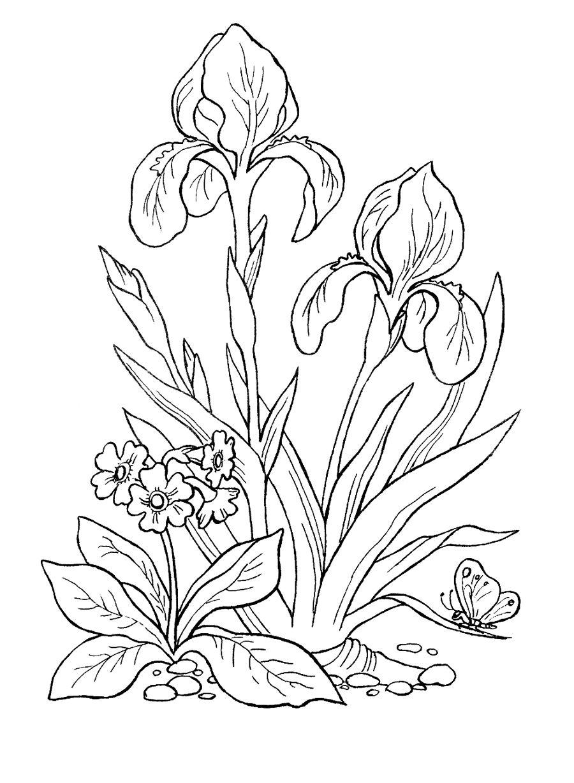 Картинки раскраски садовые цветы для детей