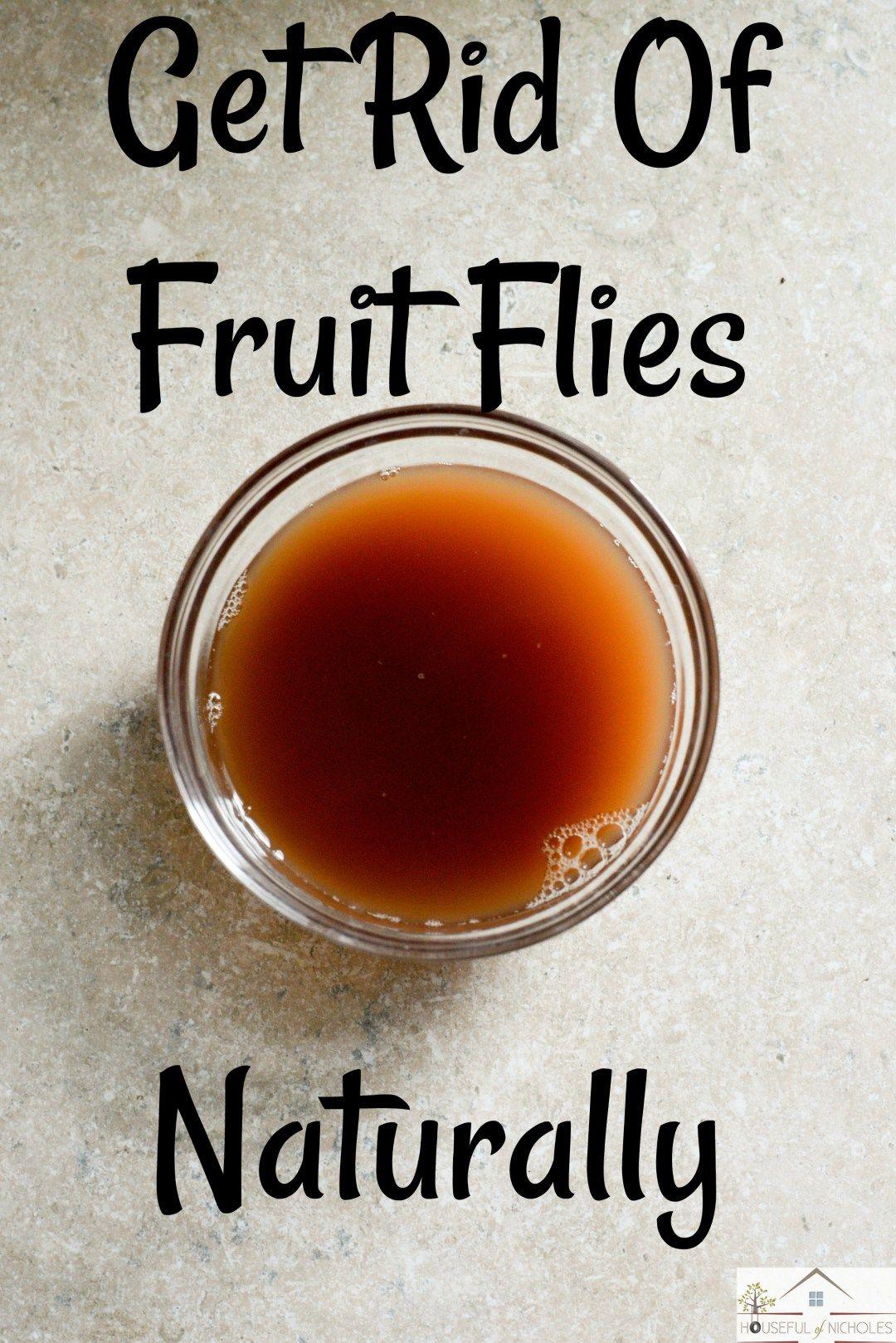 Getting rid of fruit flies remedies