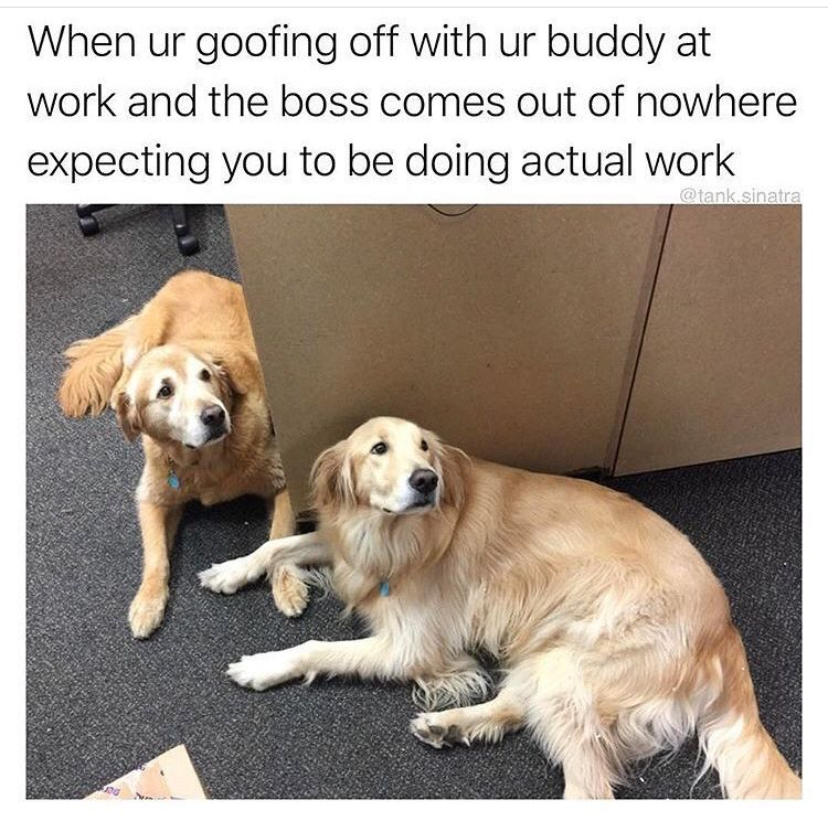 25 Workplace Memes For Anyone Who S Ever Hated Their Job Funny Dog Memes Funny Cats And Dogs Dog Quotes Funny