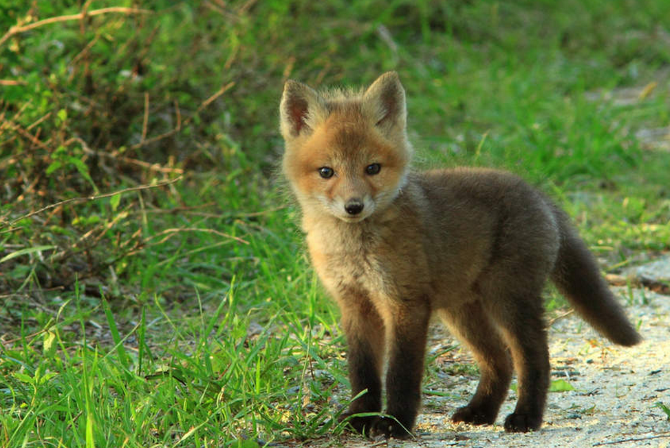 Top 50 des bébés animaux les plus mignons de l'histoire de ...