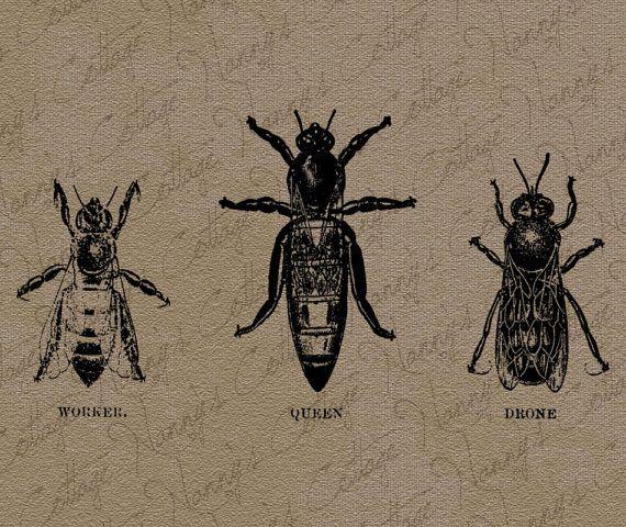 Vintage bee diagram clip art illustration digital by nannyscottage vintage bee diagram clip art illustration digital by nannyscottage 100 ccuart Gallery