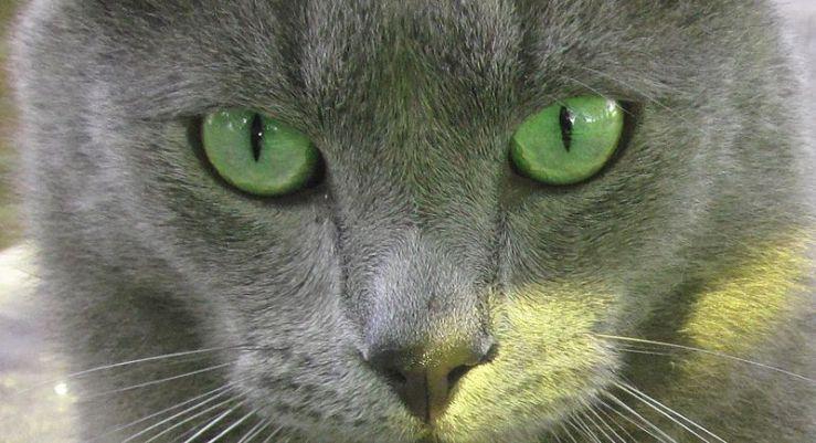 Grey Cat Names Grey Cat Names Girl Cat Names Grey And White Cat