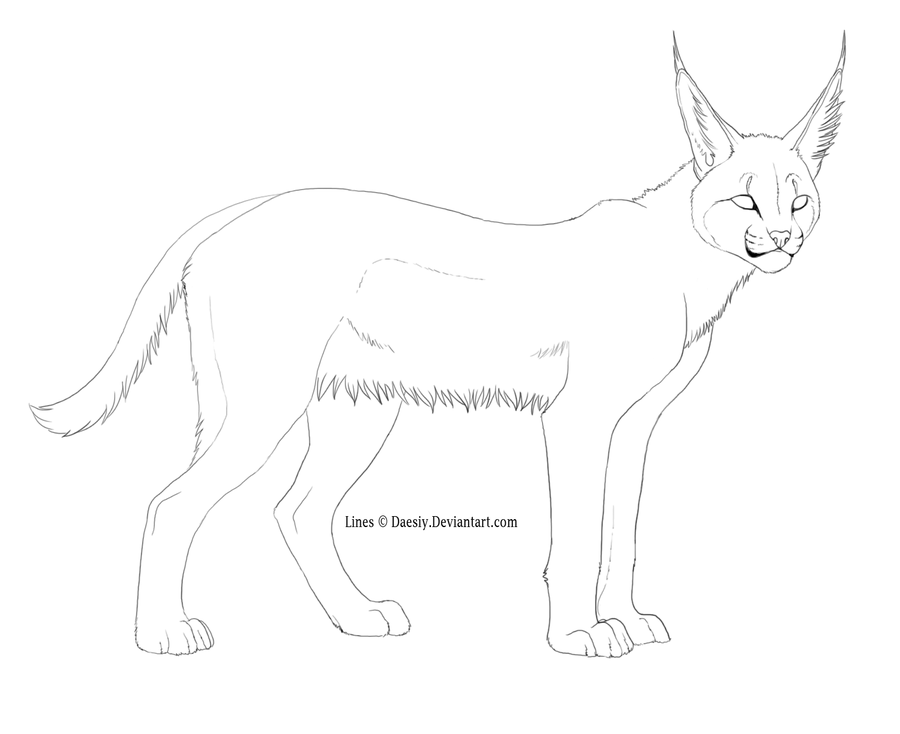 caracal coloring pages