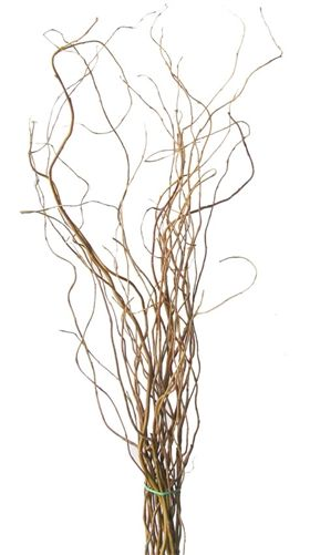 Curly Willow Branches 72 Tall 5 Bunches Shipping Included 82 87 Curly Willow Willow Branches Tree Branch Wedding Decor