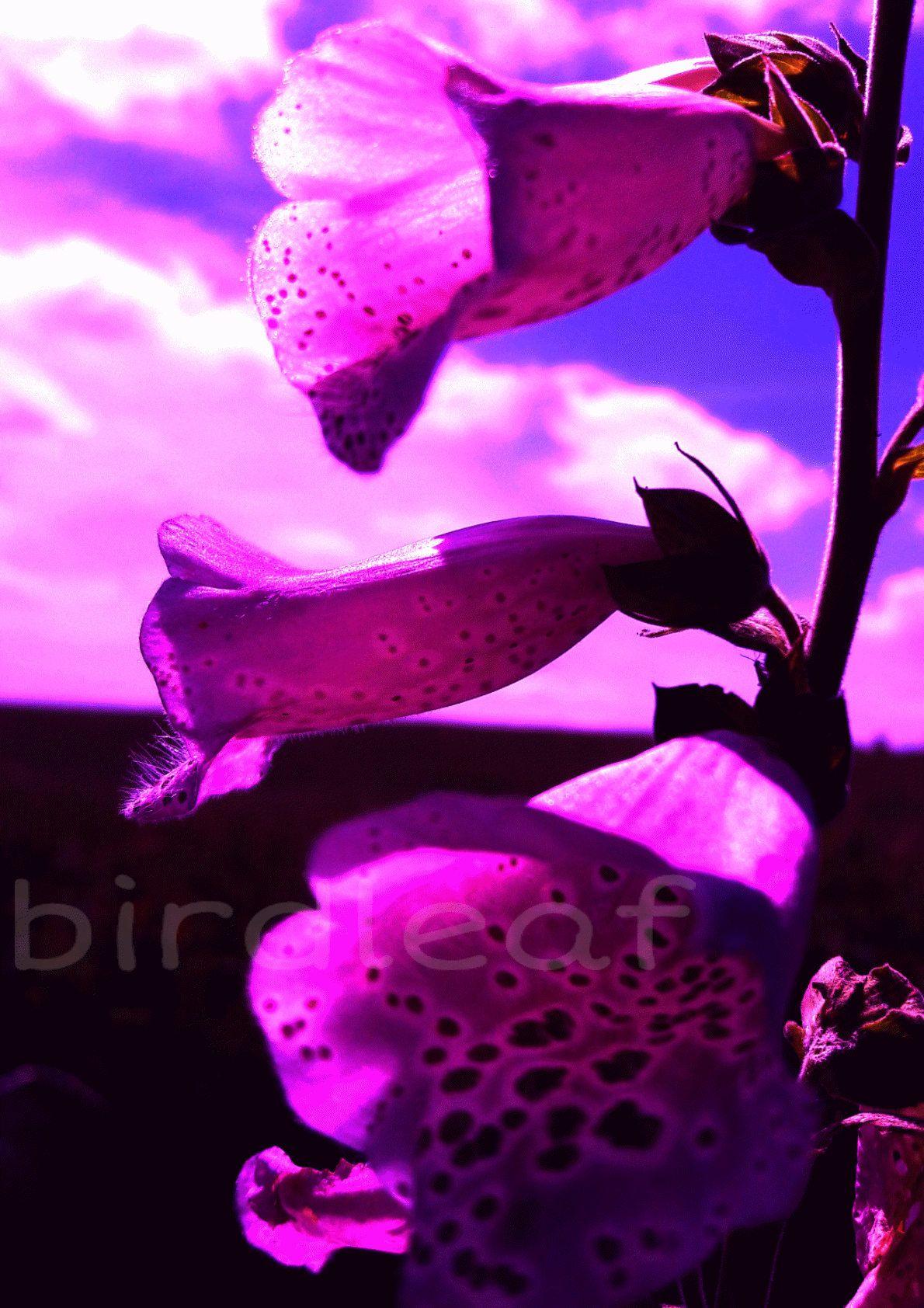 Garden wall art flowers  foxglovedigital downloadplantspink summer scenepatio garden