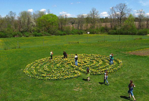 Flower bulb labyrinth