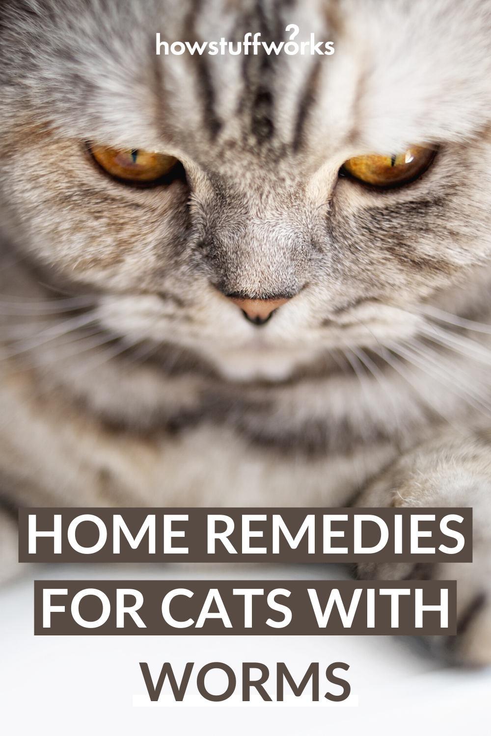 Home Remedies For Cats With Worms In 2020 Cat Worms Home Remedies Sick Kitten Cats