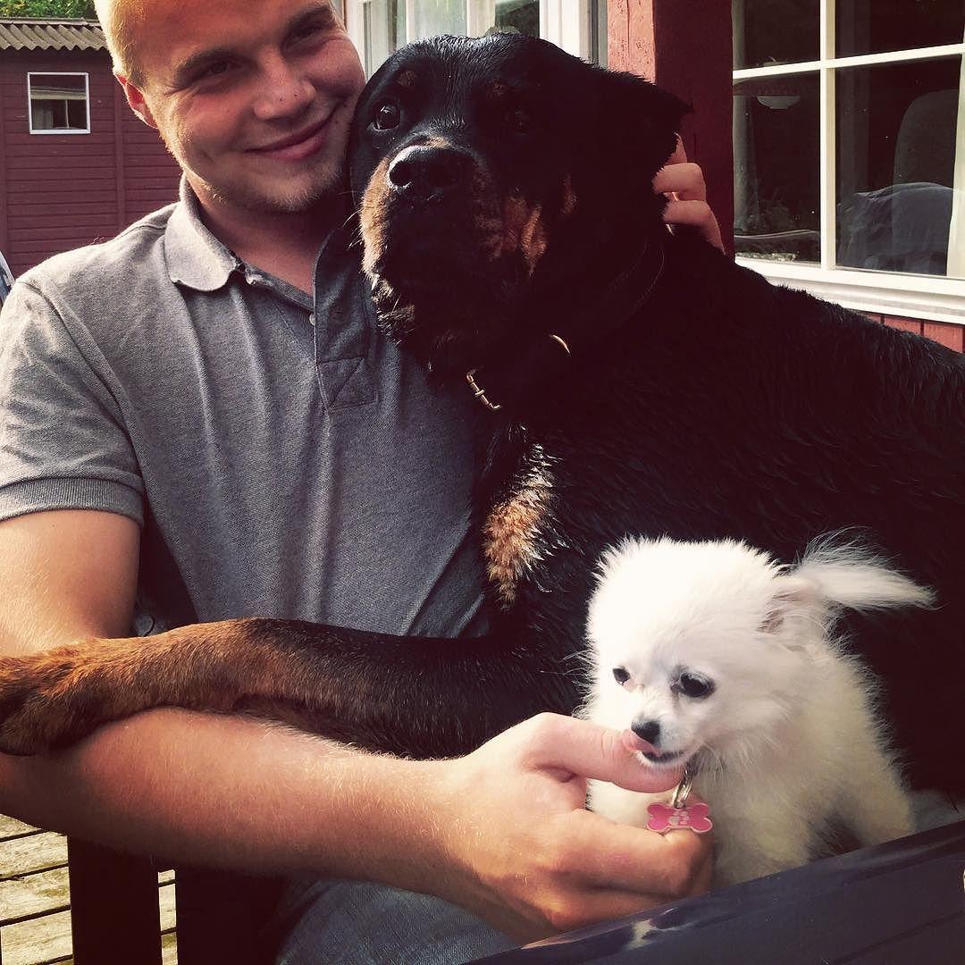 #love #mydog #mydogs #myman #wet #rottweiler #pomchi #animal #dogstagram #friendship #sweet #photooftheday #doglover #boyfriend #hug #rottweilersofinstagram #pomchisofinstagram #denmark #askø by rikkelykkebopetersen
