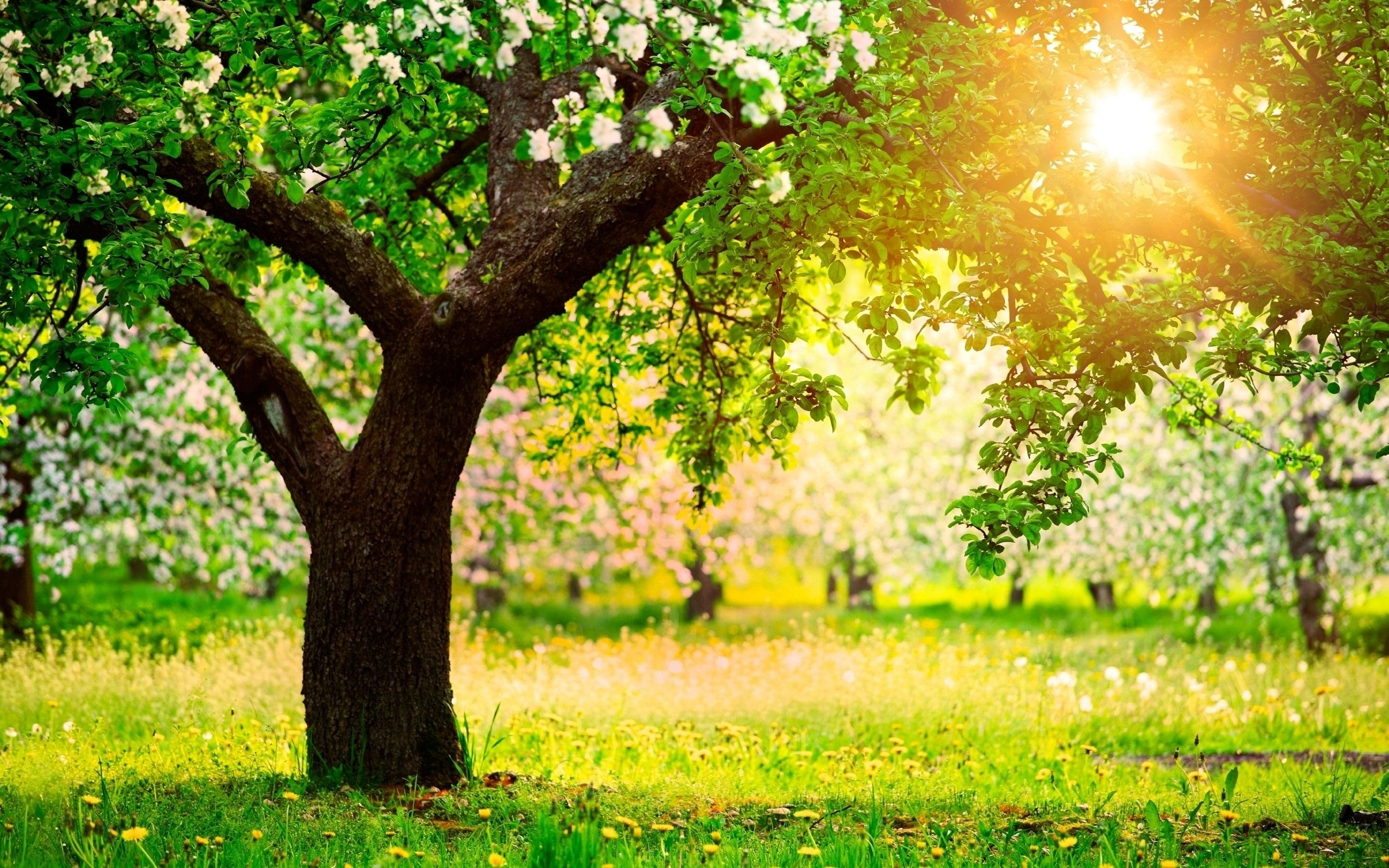 High Quality Sunny Day Wallpaper Full Hd Pictures Spring