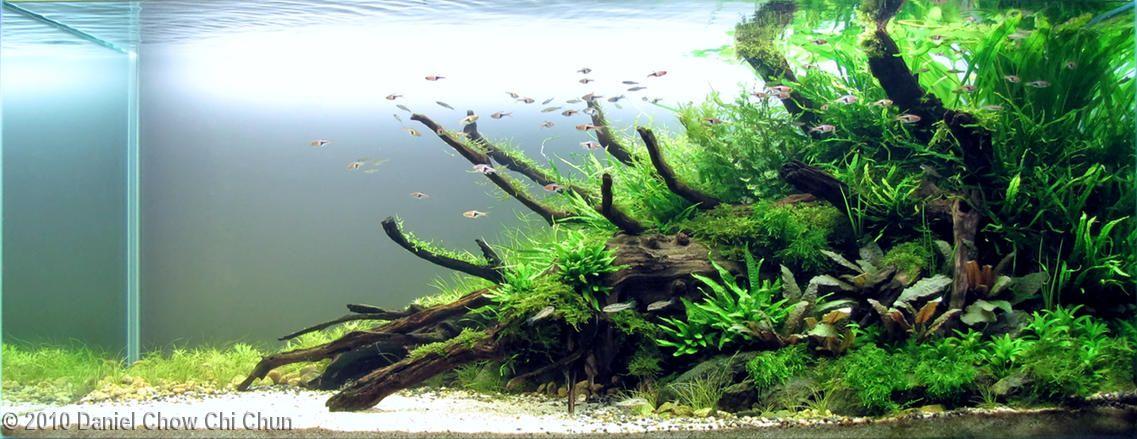 2010 AGA Aquascaping Contest - #59 (With images) | Aquascape