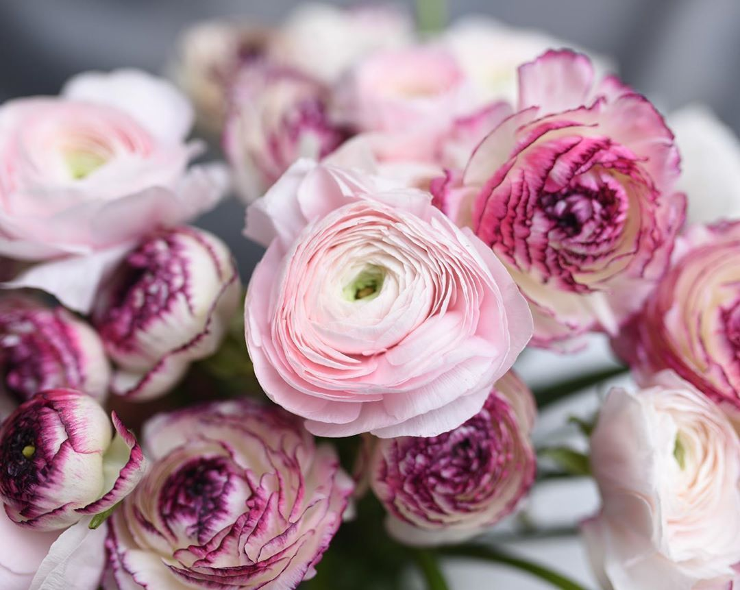 Nyc Florist Rosehip Social On Instagram That Special Time Of Year Ranunculus Are Coming In Full Force Spring Blooms Ar In 2020 Nyc Florist Spring Blooms Flowers