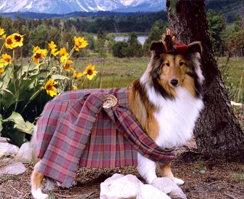 Omg This Is So Cute I Miss My Mattie Dog Collie Dog Sheltie
