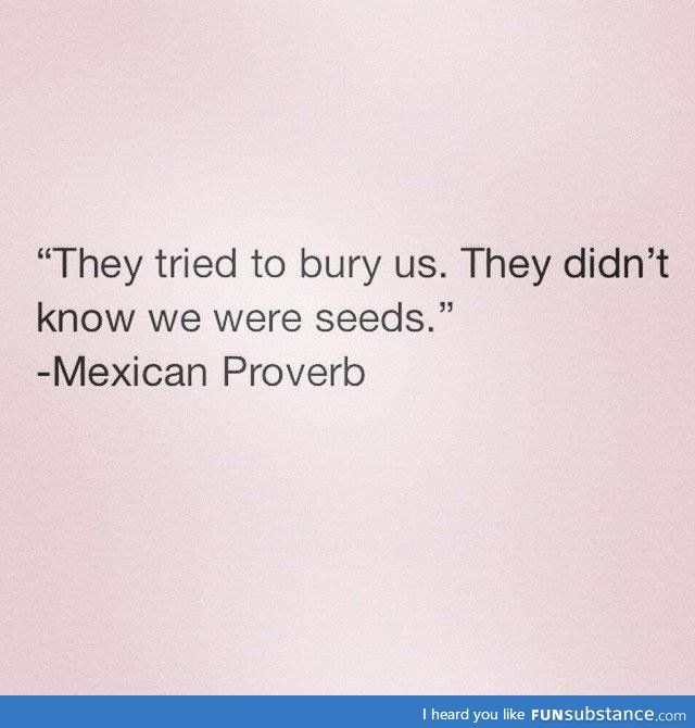 Mexican proverb - FunSubstance