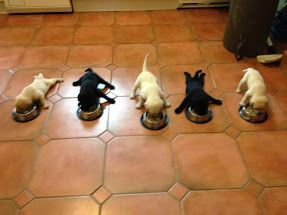 dinner time...and then nap time