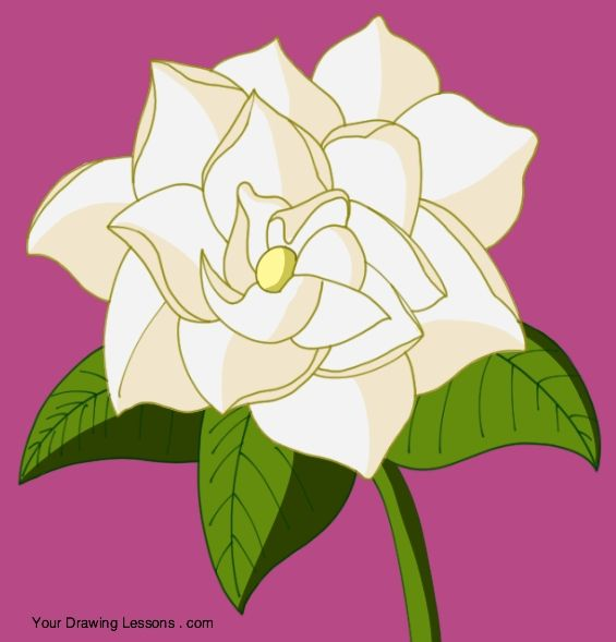 How To Draw A Gardenia Your Drawing Lessons Garden Planning Compost Drawings