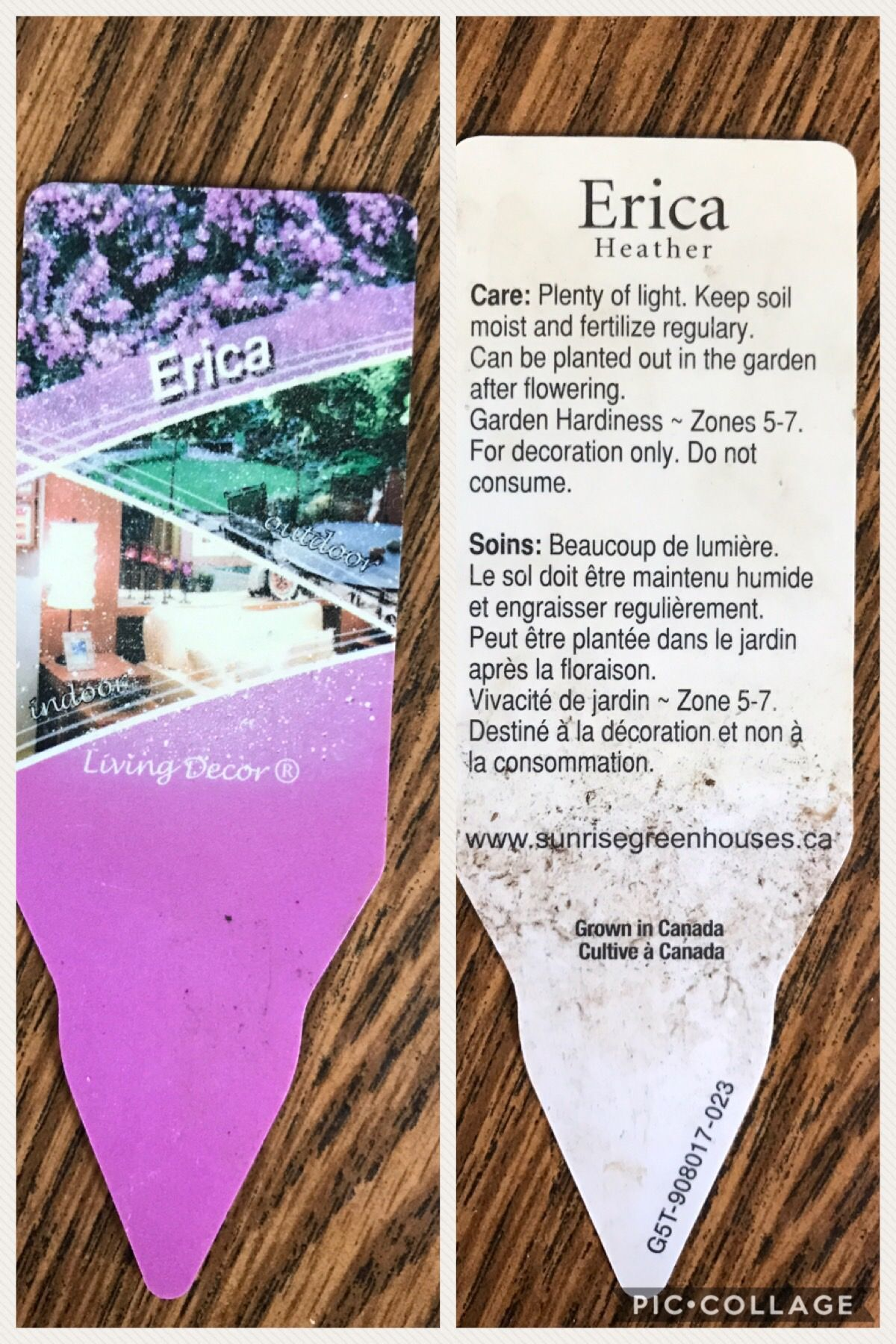 Erica Heather Plant Info Heather Plant Plants Seed Packets